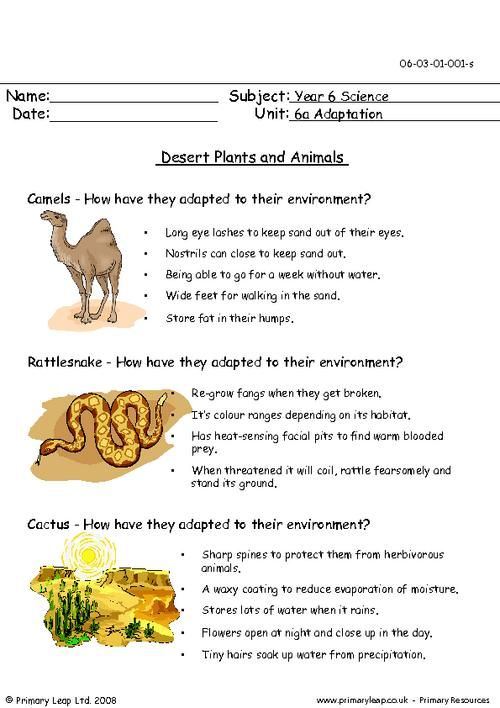 PrimaryLeap.co.uk - Desert plants and animals Worksheet ...
