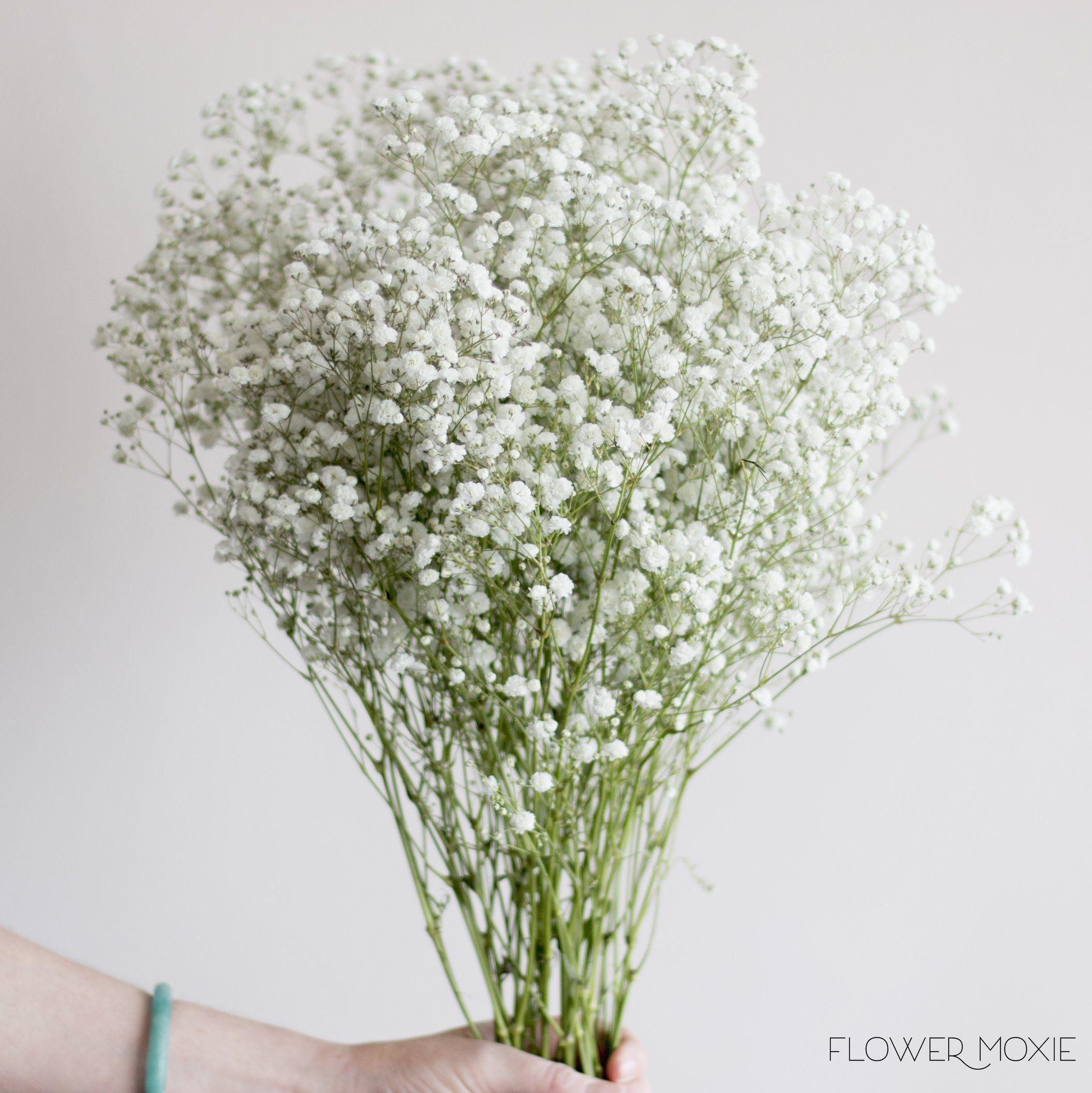 Baby S Breath Flowerdefault Title Fresh Wedding Flowers Babys Breath Flowers Wedding Bouquets