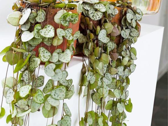 gr npflanzen im zimmer so werden sie in szene gesetzt wohnung pinterest pflanzen. Black Bedroom Furniture Sets. Home Design Ideas