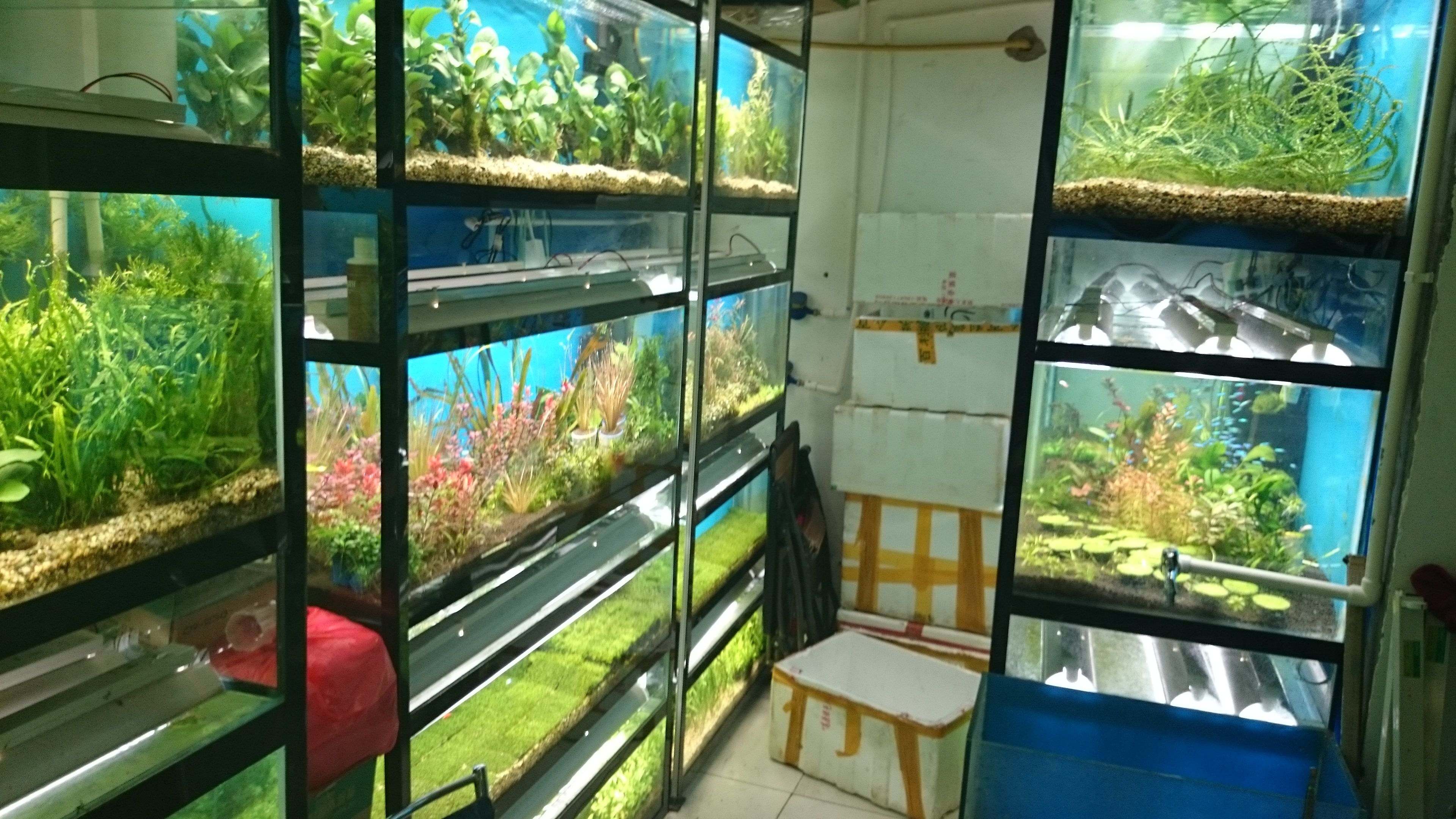 Street with aquarium stores in Shanghai China trip