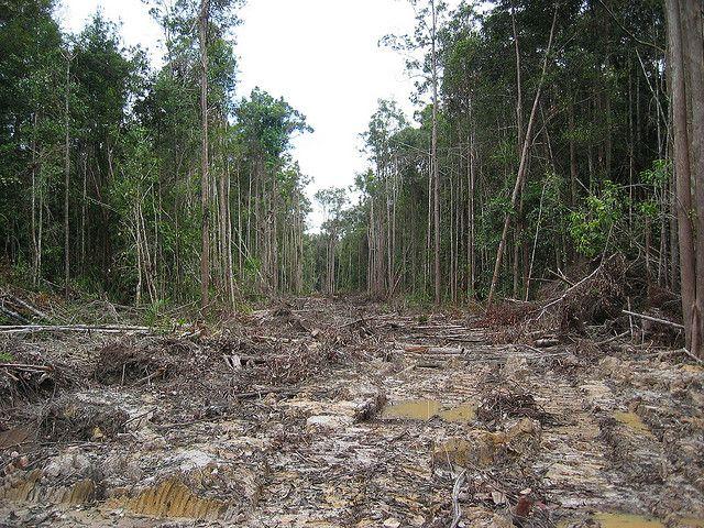 The Magic Of Borneo Indonesia Uptourist Borneo Borneo Rainforest Rainforest Destruction