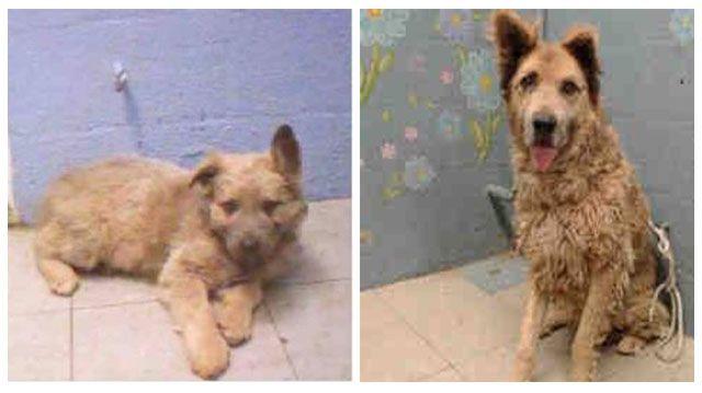 Devuelven a un perro al refugio casi una década después de haber sido adoptado. Ahora se encuentra solo entre las paredes de un refugio.