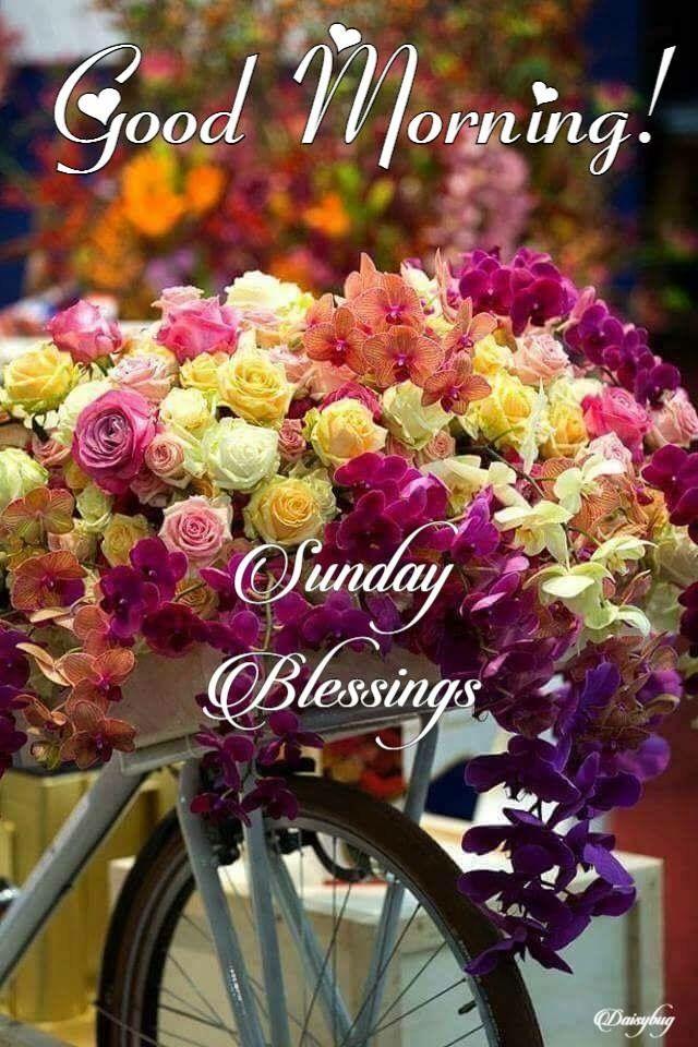 Happy Sunday Sunday Sunshine Beautiful Flowers Beautiful