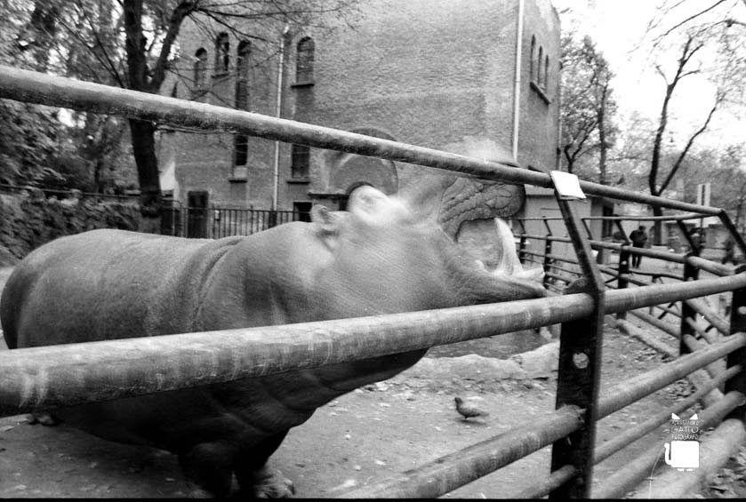 Lo zoo dei Giardini Pubblici di Milano Zoo, Milano, Giardino