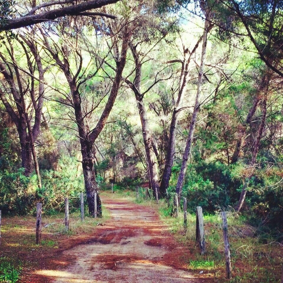 When a #place can talk to you..silently.. #wood #italy #Italia #marinadicamerota. #Palinuro #Campania #Cilento #pineta #relax #peace #pace seguimi su www.ciaoweekend.net