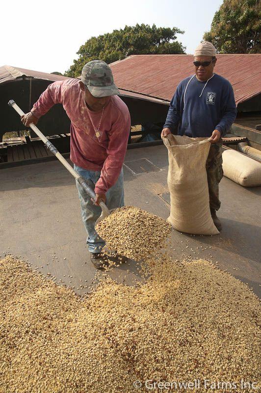 Kona Coffee Farm Tours At Greenwell Farms Farm Tour Coffee Farm Big Island Hawaii