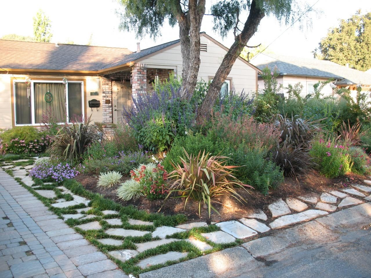 Plantworld before and after photos alamo residence for Drought tolerant yard