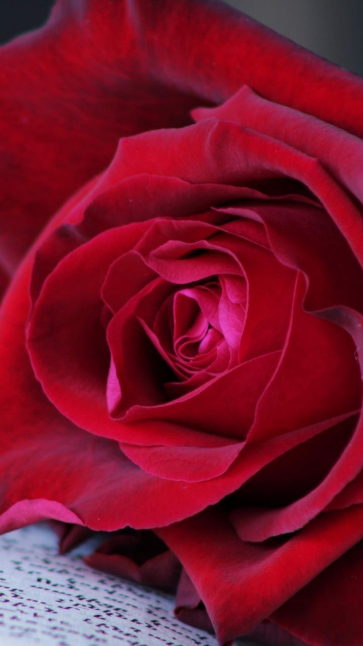 Pin By Vanny On Des Fleurs Red Roses Flower Wallpaper