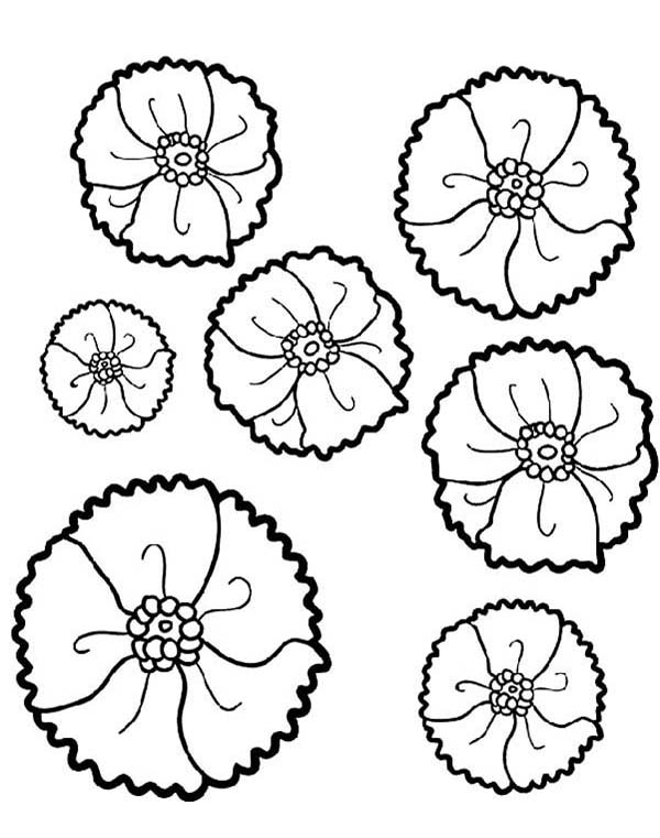 Pin by KidsPlayColor on California Poppy Coloring Pages