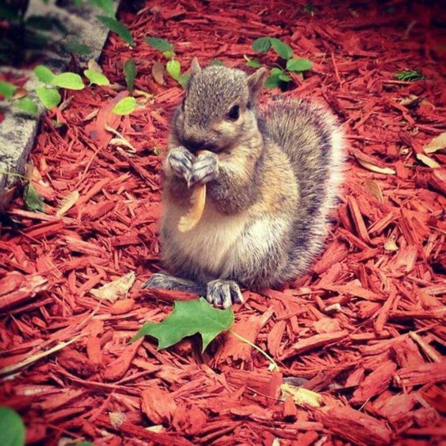 in your garden adorable animals pinterest squirrel animal