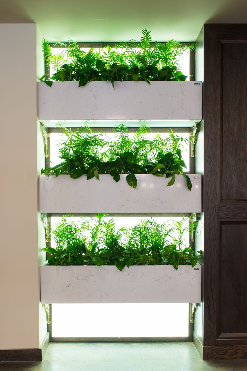 Incredible Indoor Plant Display With