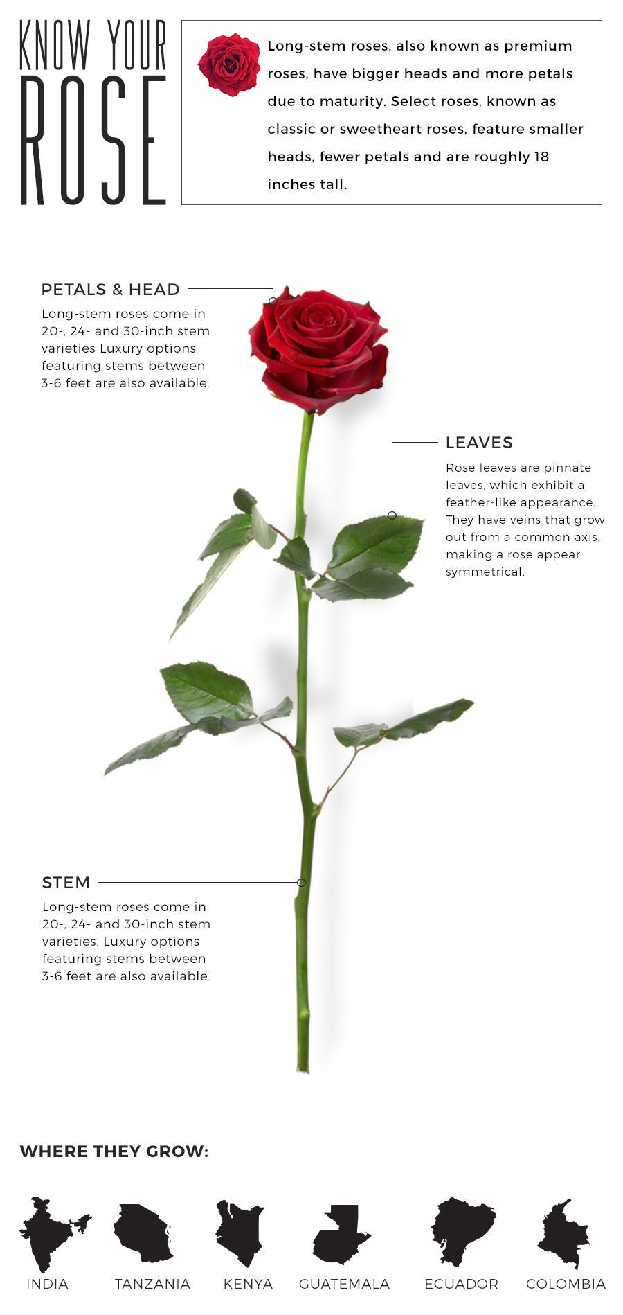 Anatomy, Terminology, & Luxury Your Rose Guide Fresh by