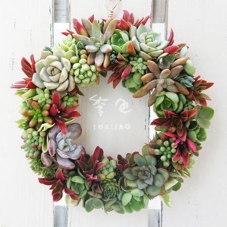 Wreath 多肉植物のリース