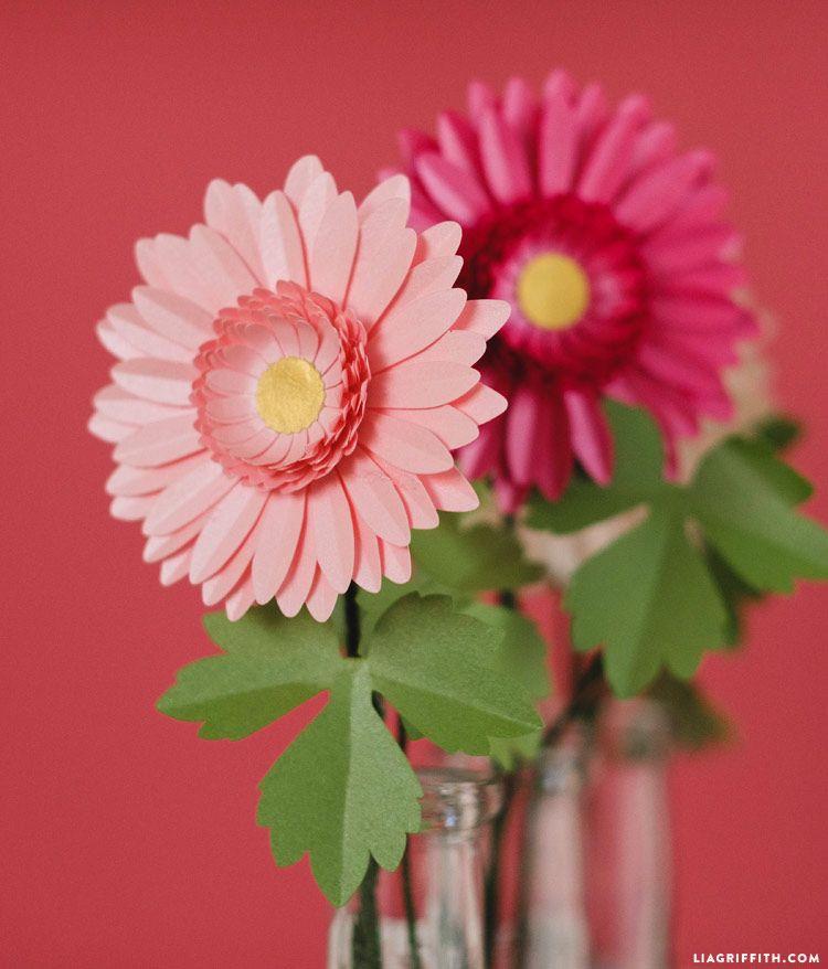how to cut gerbera daisies