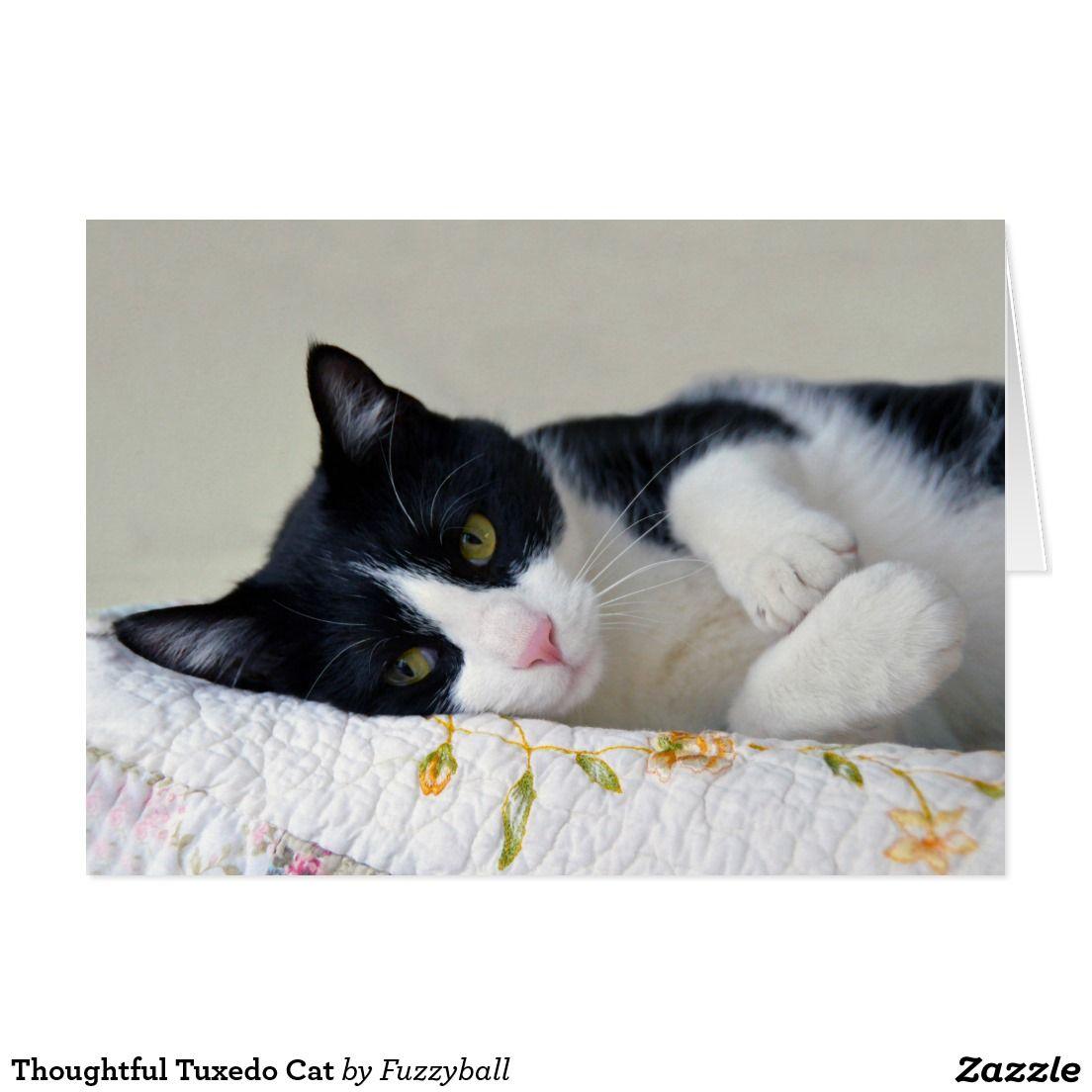 Thoughtful Tuxedo Cat Card Zazzle Com Tuxedo Cat Cats Cat Cards