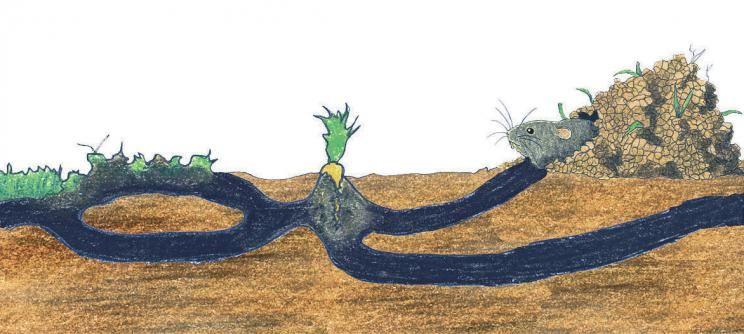 Maulwurf Oder Wuhlmaus Kaktus Tiere Feldmaus