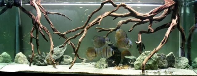 Wild Discus Biotope Aquarium Diy Fish R
