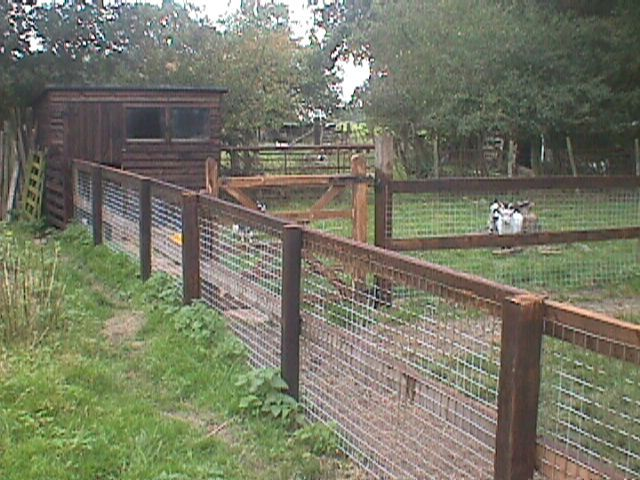 Perfect. Small animal fencing. | 1 Homestead | Pinterest | Ziege und ...