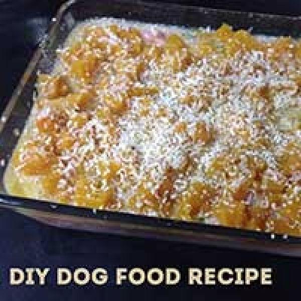 Homemade dog food recipe chicken casserole for your dog via homemade dog food recipe chicken casserole for your dog via myoodle forumfinder Gallery