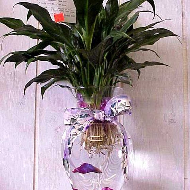 How to care for a betta fish in a vase betta fish betta for How to care for a betta fish