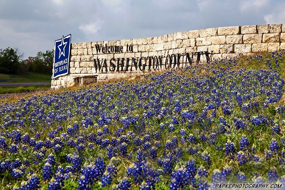 Bluebonnet obsession!!  Washington County, TX