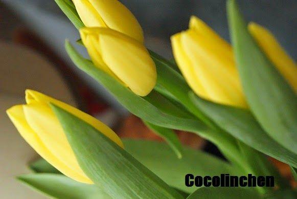 Cocolinchen : Sonniger Freitag