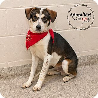Troy Oh Beagle Mix Meet Marley A Dog For Adoption Http Www