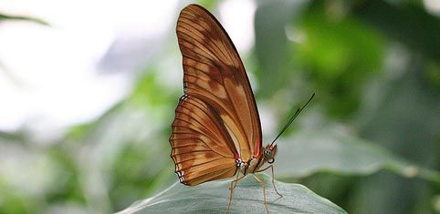 Colorful Beauty in Nature: Butterflies ~ http://clrlv.rs/9DLSvx /via @COLOURlovers