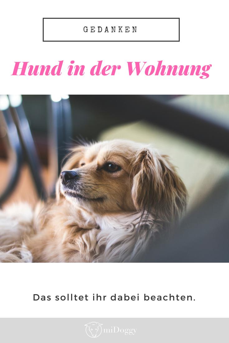 Leiden Grosse Hunde In Wohnungen Hundeerziehung Hunde Welpen Erziehung Kleine Hunde