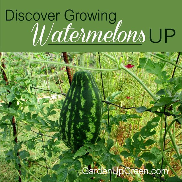 The 10 Best Vegetables And Fruits To Grow This Fall In: How To Grow Watermelon