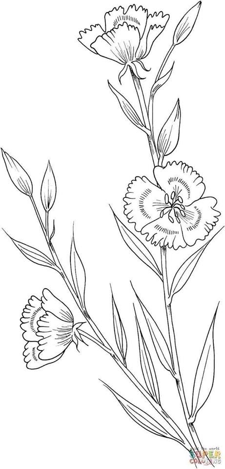 Pin By Corinnea Davis On Flower Embroidery Patterns Spring Coloring Pages Flower Coloring Pages Poppy Coloring Page