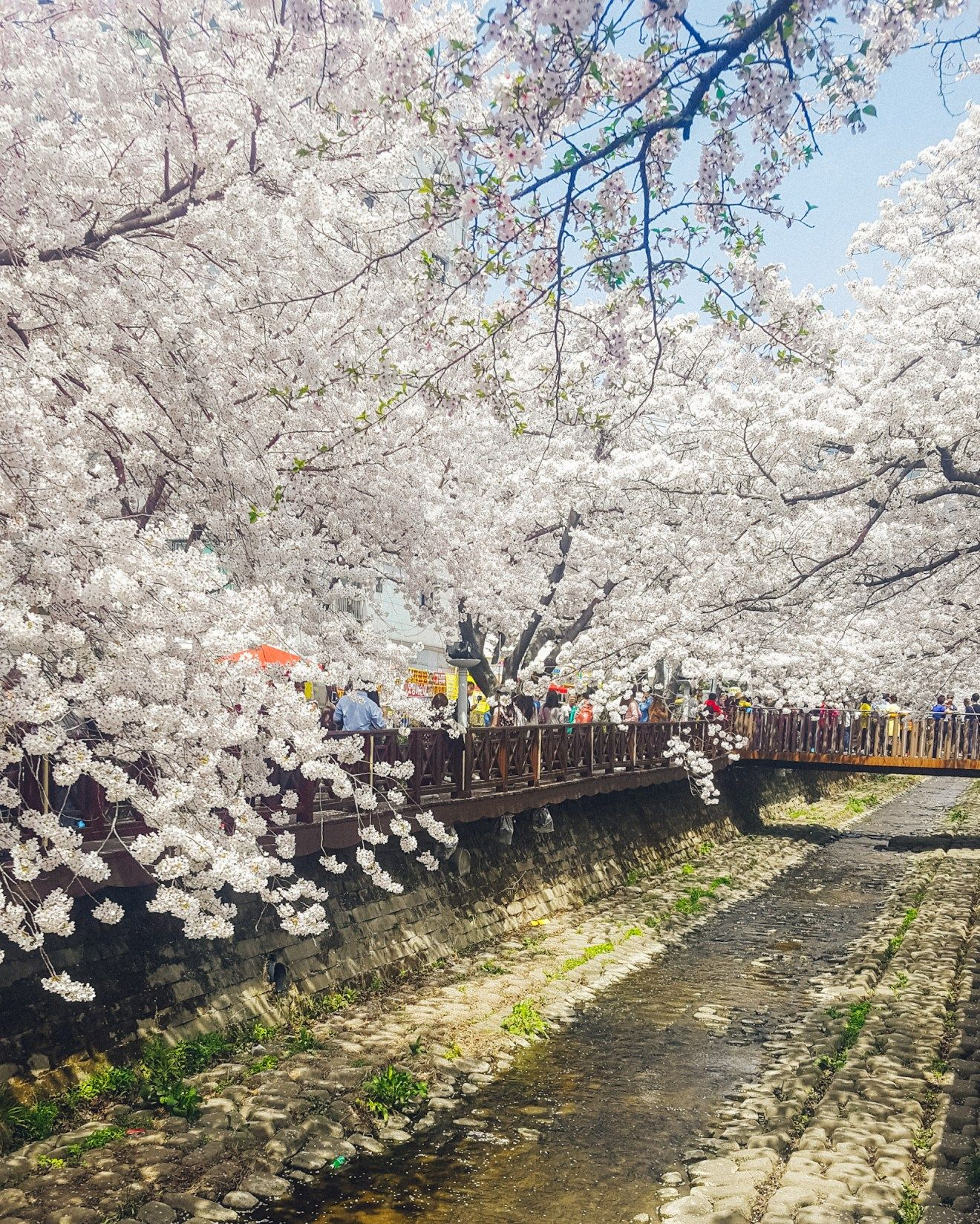 Best Places To See Cherry Blossoms In Korea A Finn On The Loose Cool Places To Visit Places To See Island Park