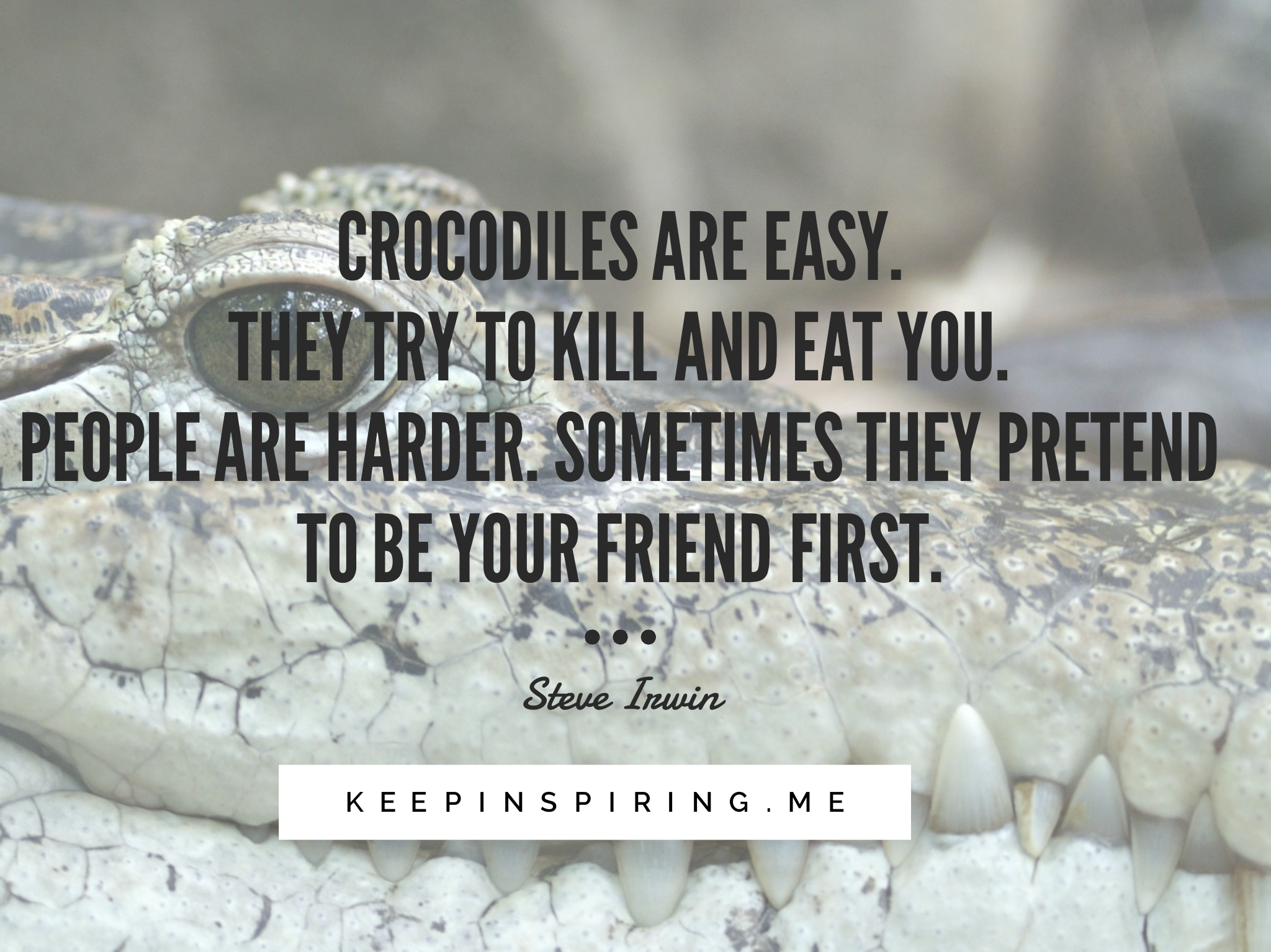 Funny Quotes From Everyone S Favorite Crocodile Hunter Steve Irwin Funny Quotes Quotes Funny