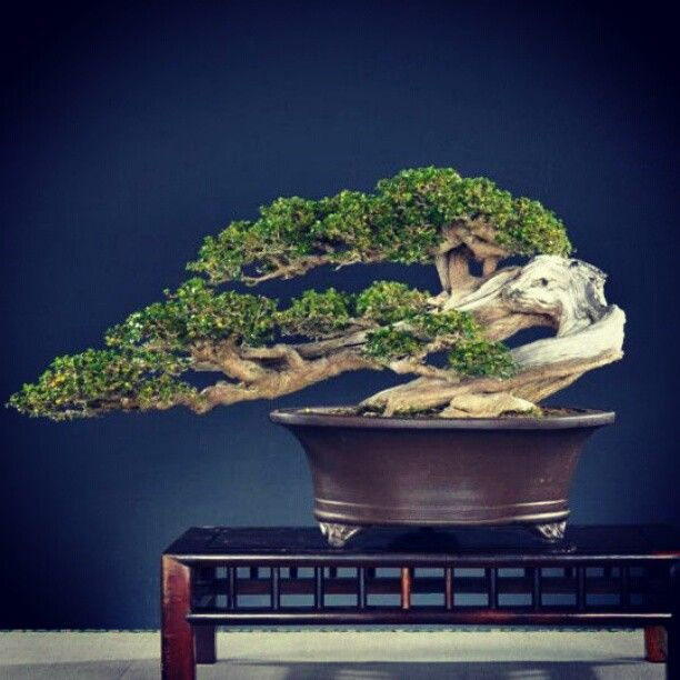 Curved Bonsai More At FOSTERGINGER @ Pinterest