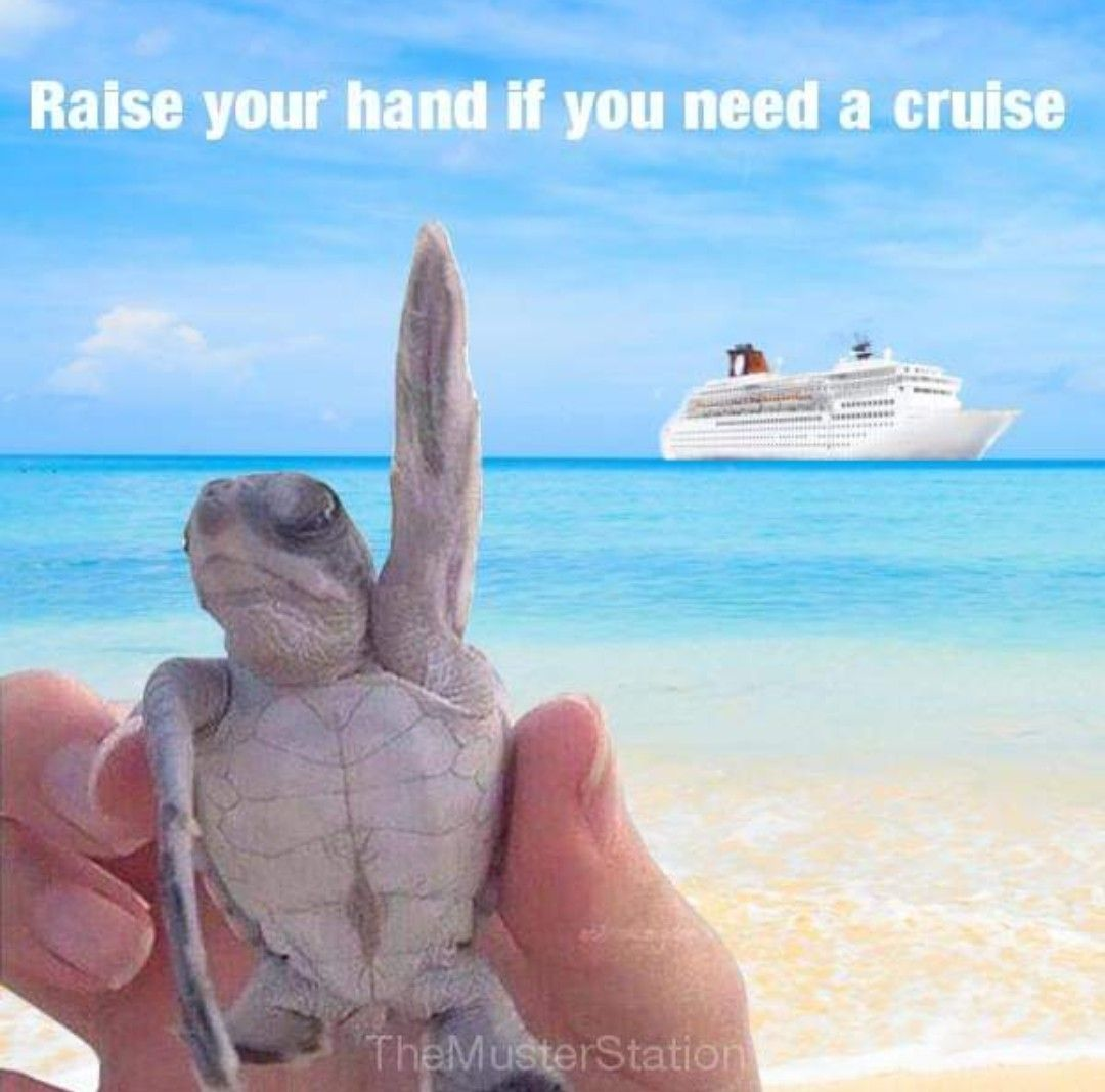 Pin by Lyndsey Shea on Wanderlust ⛺️ ️⛵️ Cruise vacation