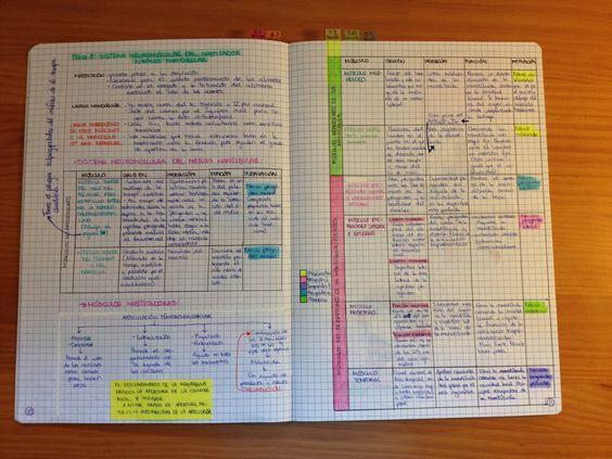 Premedprobz Studylikeadoctor My Anatomy Revision Notebook