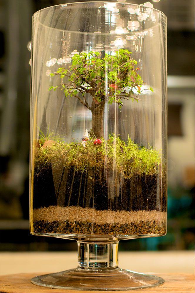 Miniature Terrarium Garden jardinería y sus secretos Pinterest