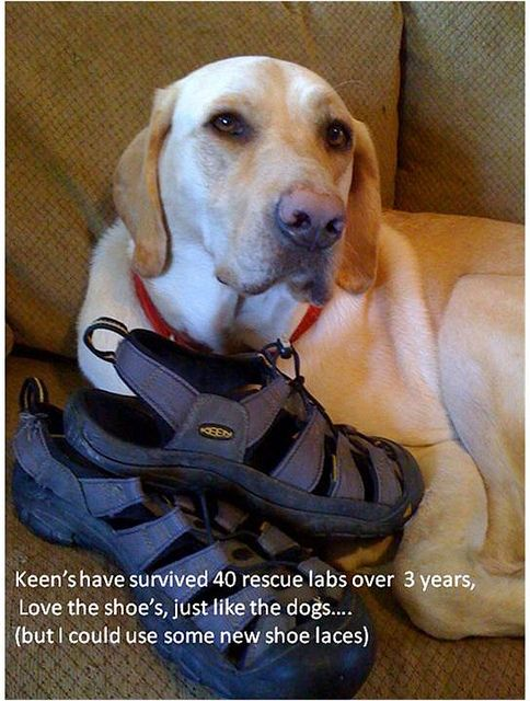 Rescue Dog Keens Female Dog Names Dog Names Rescue Dogs