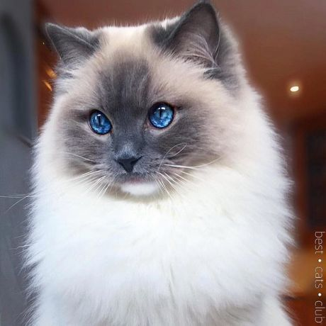 Удивительный мир   Смешные котята, Котята и Красивые кошки