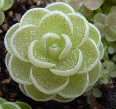 Удивительная красота суккулентов: растительная геометрия ...
