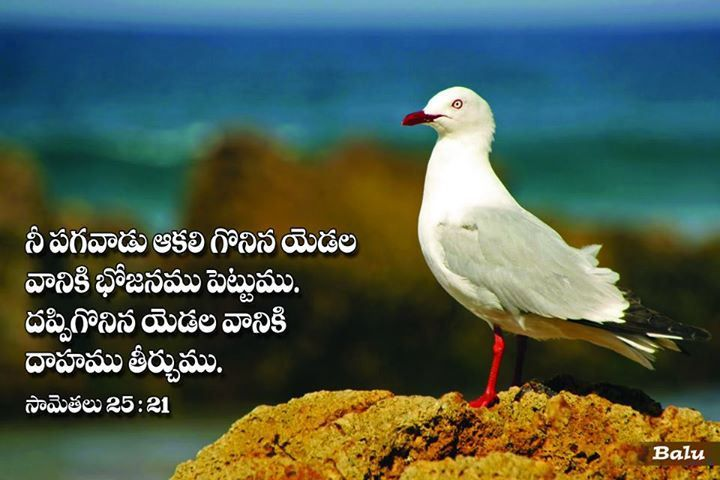Jesus Promise Telugu Free Download Gospel Daily Bible Qoutes Read Bible Bible Quotes Wallpaper
