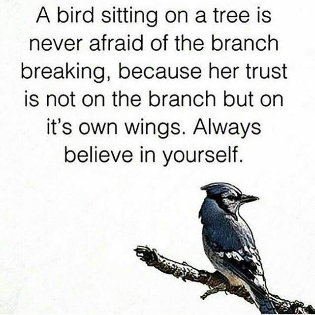 Wise words from a bird