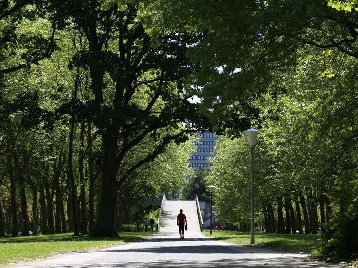 Alsterdorf liegt im Norden Hamburgs. Nicht nur der Name macht den dörflichen Charakter des Stadtteils aus. Die namensgebende Alster schlängelt sich hier als Flüsschen durch die Stadt und in den wenig befahrenen Straßen des Stadtteils findet sich viel Grün.
