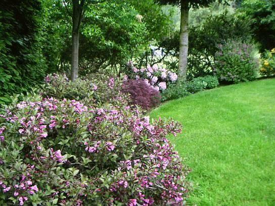 Große Freiwachsende Hecke   Input Gesucht!   Mein Schöner Garten Forum