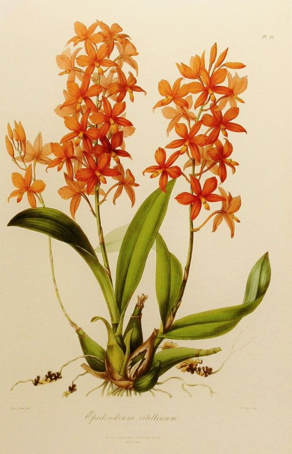 Orchid Art Print Flower Wall Art Botanical by ParagonVintagePrints ...