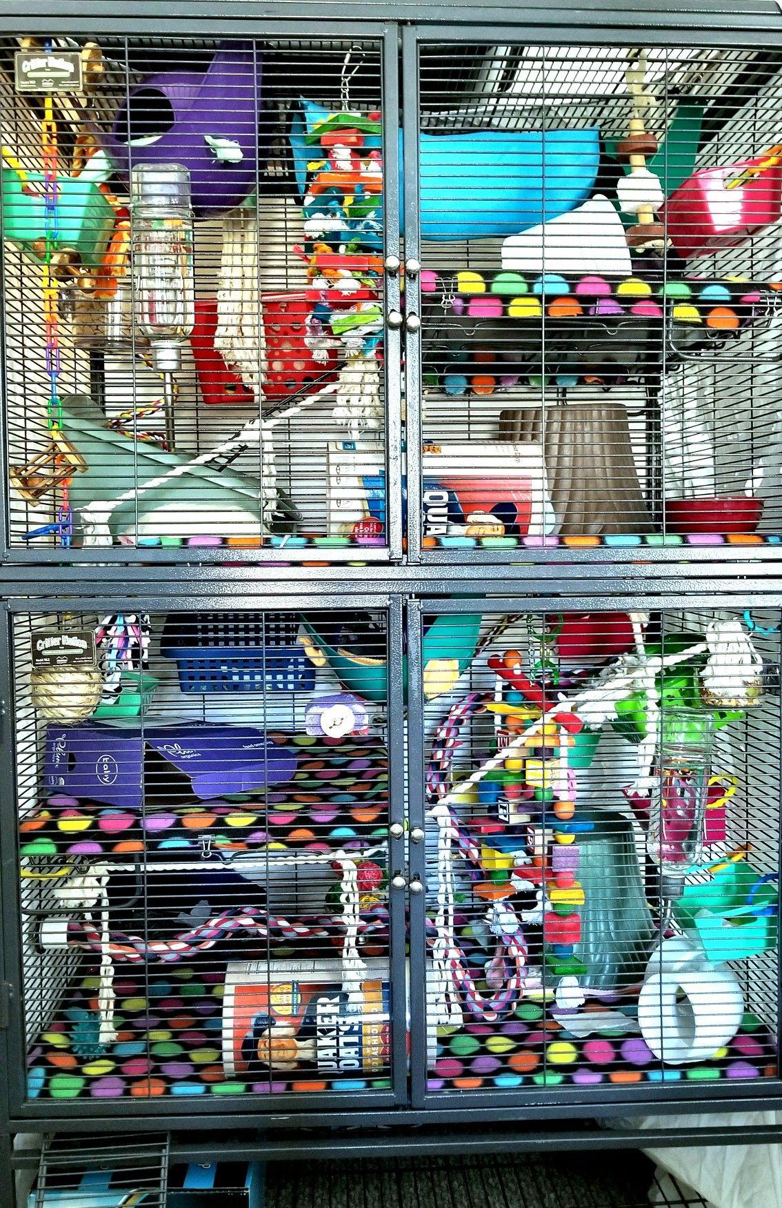 Wonderlijk Dec 17 2017 cage layout (5 male rats) • cage: double critter ED-22