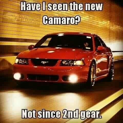 Mustang Mustang Humor Mustang Mustang Meme