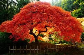 alberi resistenti