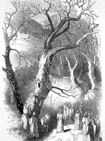 Druids Trees:  #Druid Ritual.