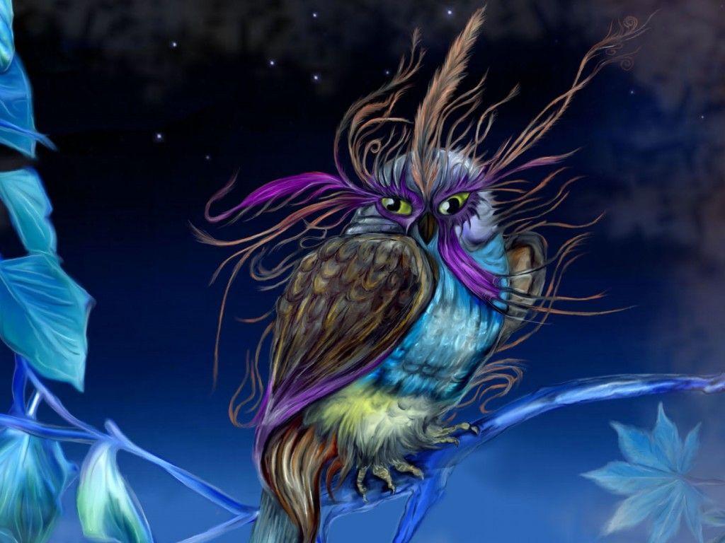 Fasan Eule Vogel Wobei Nacht Handy Hintergrundbilder 1024x768